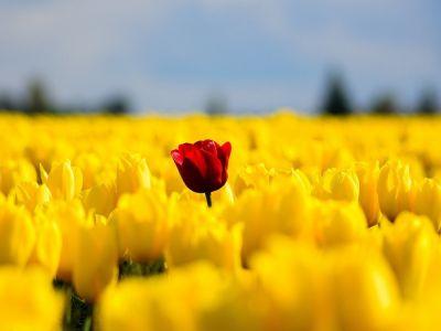 Какое количество цветов можно дарить?