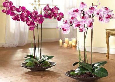 Как ухаживать за орхидеей, купленной в магазине