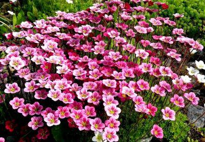 Многолетние садовые цветы – декоративные уголки любования