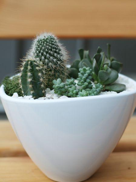 Мини-сад из кактусов и суккулентов №2