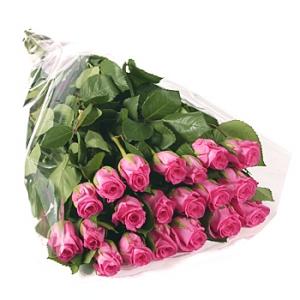 большой из розовых роз