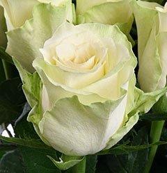 Роза Athena (Атена)