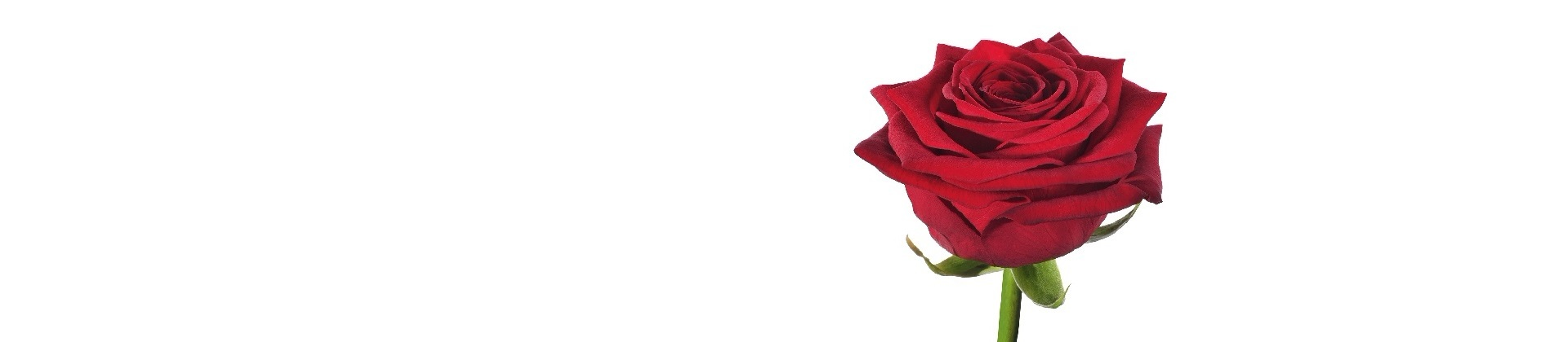 Роза Ред Наоми по супер цене