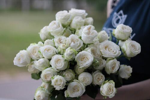 Кустовые розы Miss Bombastic