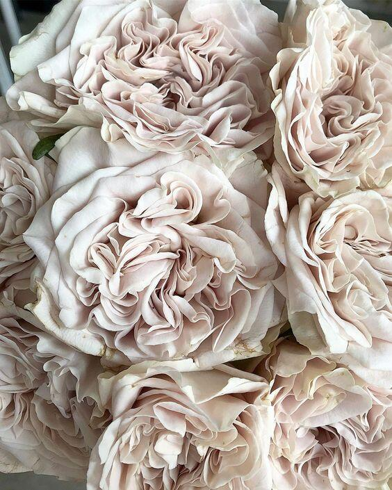 Роза Westminster Abbey