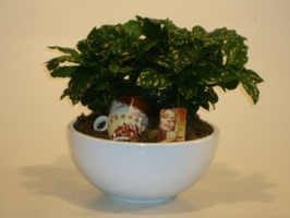 Кофе(Coffea In Bowl+Cup+Label)