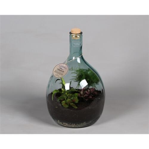 Мини-сад в бутылке (Terrarium met arrangement)