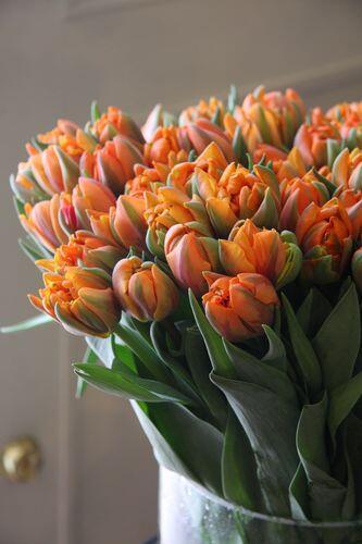 Тюльпан Orange Princess