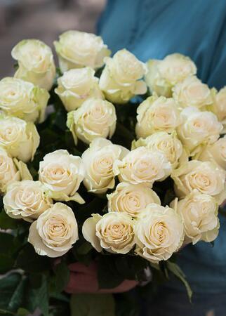 Роза Mondial (Мондиаль)
