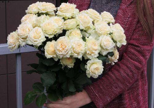 Кустовая роза Самер Роуз (Sammer Rose)