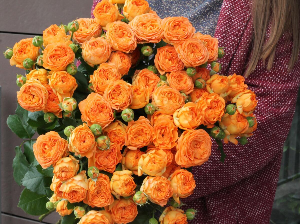 Кустовая роза Оранж Трендсеттер (OrangeTrendsetter)