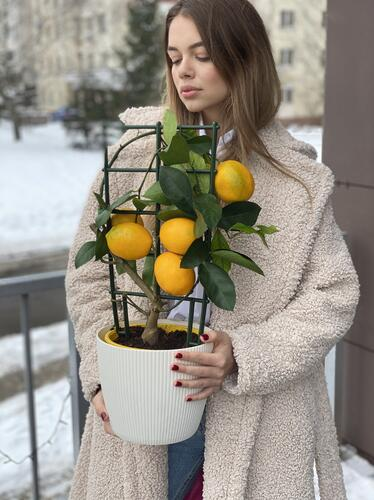Лимоон Мейера (Meyer's Lemon)