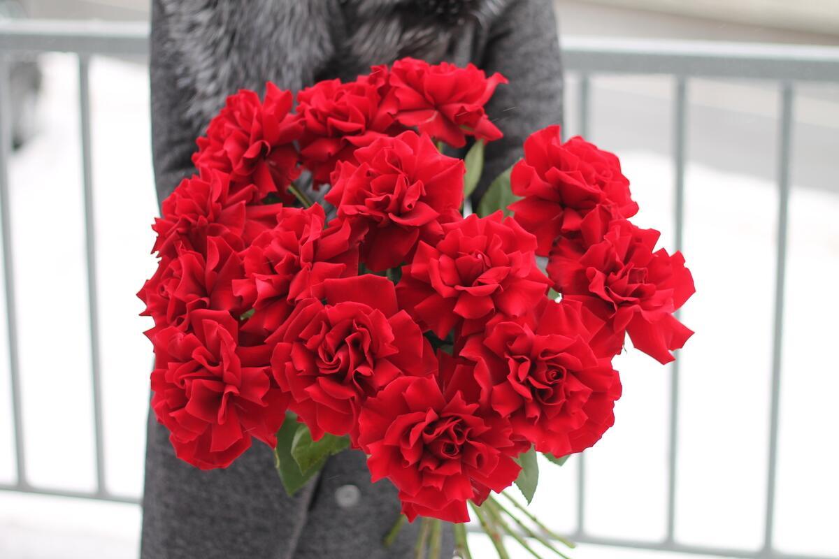Французская роза красная