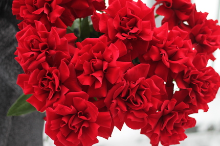 Французская роза