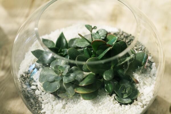 Мини-сад из суккулентов в стеклянной колбе №3