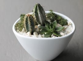Композиция из кактусов и суккулентов №4