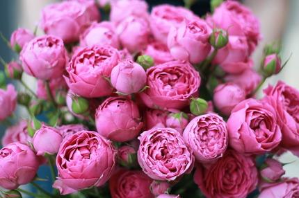 Розы Misty Bubbles