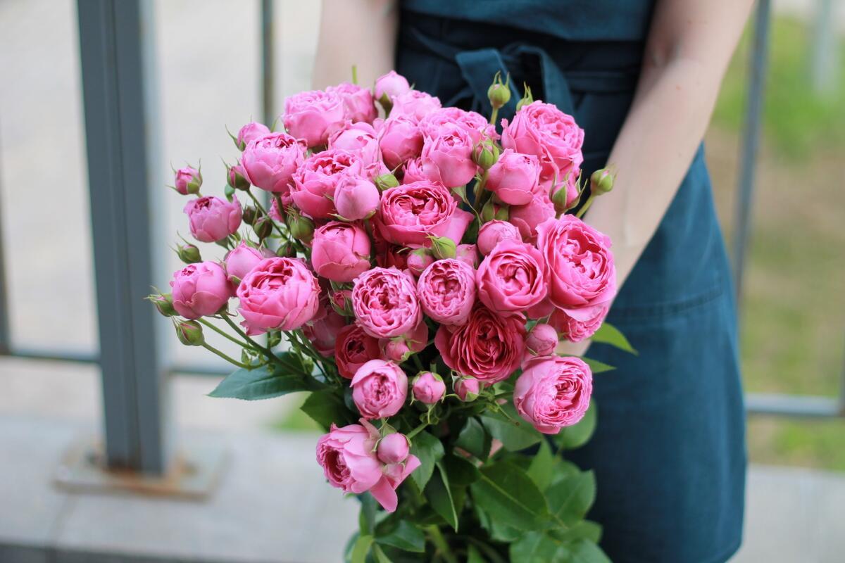 Кустовые розы Misty Bubbles