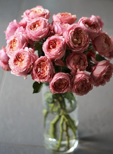 Кустовая пионовидная роза Джульетта (Juliet)
