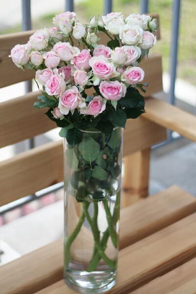 Кустовая роза  Subati