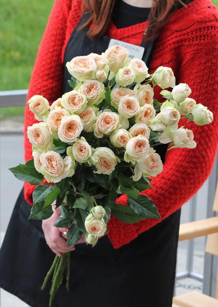 Роза кустовая Pavlova