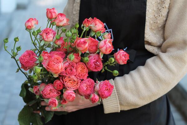 Роза кустовая Apricot Lace (Эприкот Лейс)