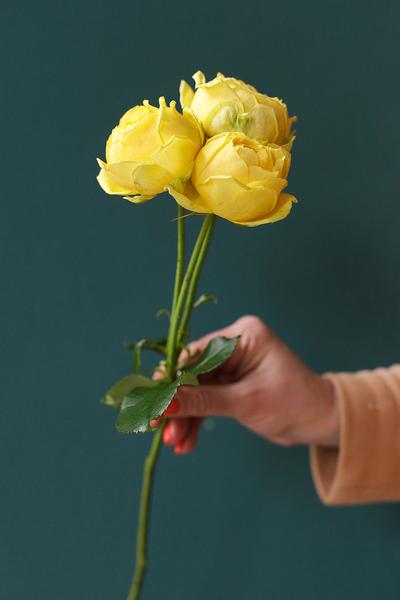 Роза Каталина (Catalina)