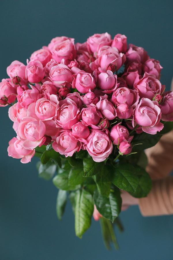 Кустовая роза Силва Пинк (Silvia Pink)