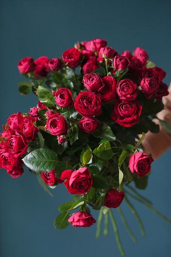 Роза кустовая пионовидная Руби Бижу