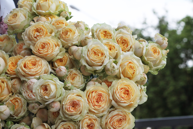 Роза кустовая Lovely Yo-yo