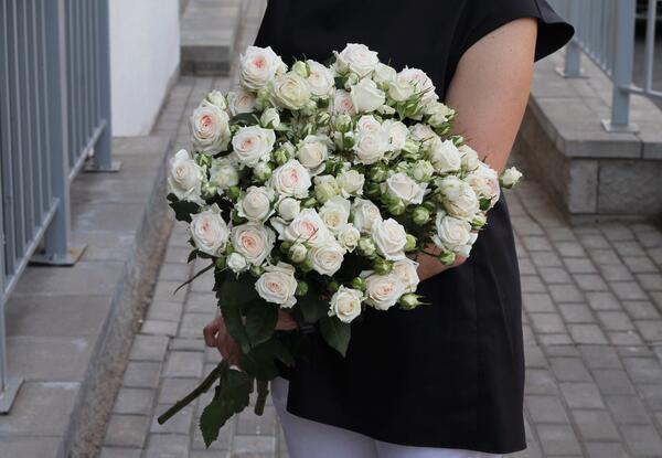 Роза кустовая Exclusive Sensation (Эксклюзив Сенсейшн)