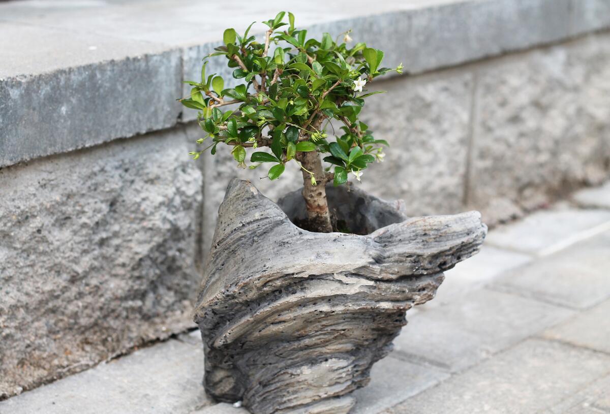 "Бонсай ""Дерево на камне"""