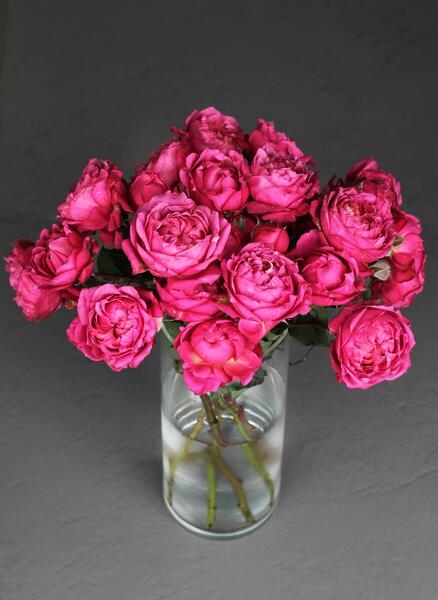 Кустовая пионовидная роза Малиновая Джульетта (Juliet)