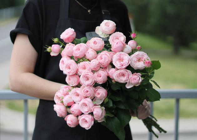 Кустовая роза Mansfield Park розовый