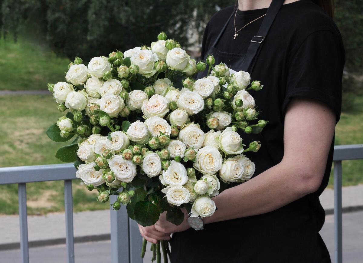 Кустовая роза Принцесса Бомбастик (Princess Bombastic)