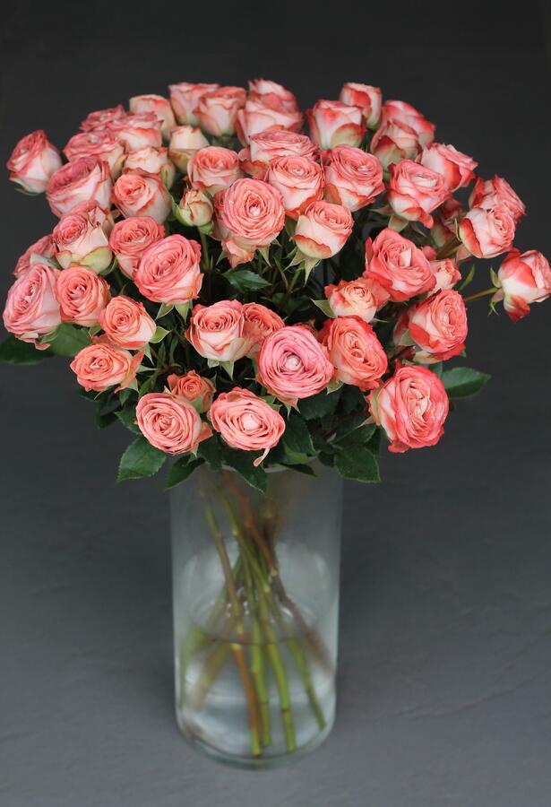 Кустовая роза Медиа