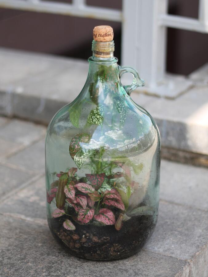 Мини-сад в бутылке (Terrarium met arrangement) с фиттониями