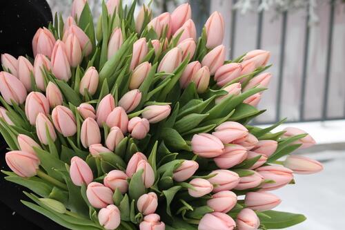 Тюльпаны Тай Бутс