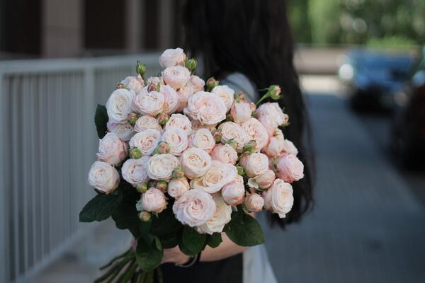 Кустовая роза Bombastic
