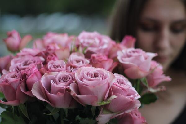 Роза кустовая Монмартр (Montmartre)