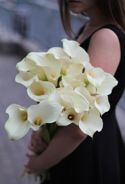 Калла белая (white Calla)