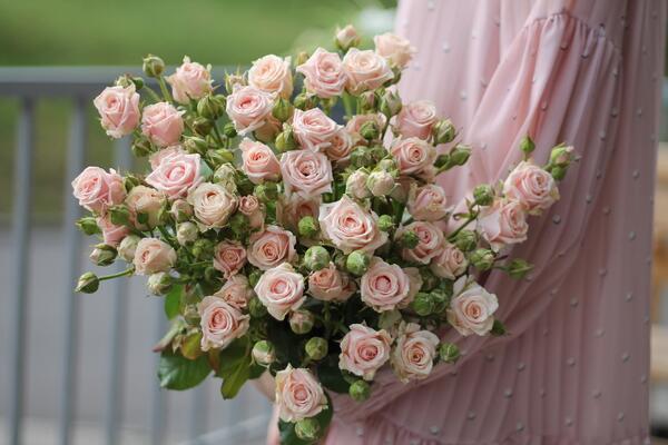 Роза кустовая Свит Фортун (Sweet Fortune)