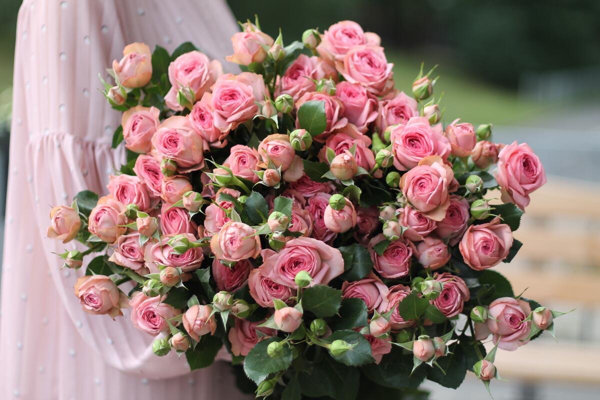 Роза кустовая Нюд Лейс (Nude Lace)