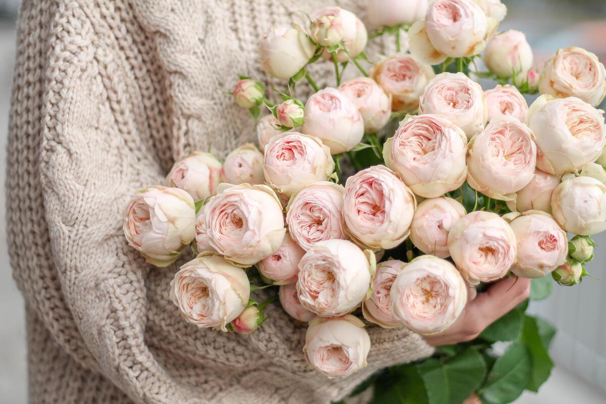 Кустовая роза Mansfield Park