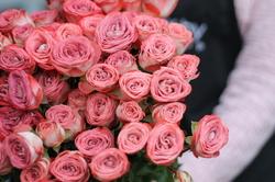Роза Медиа