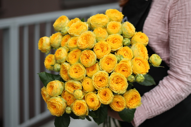 Кустовая роза Luna Trendsetter