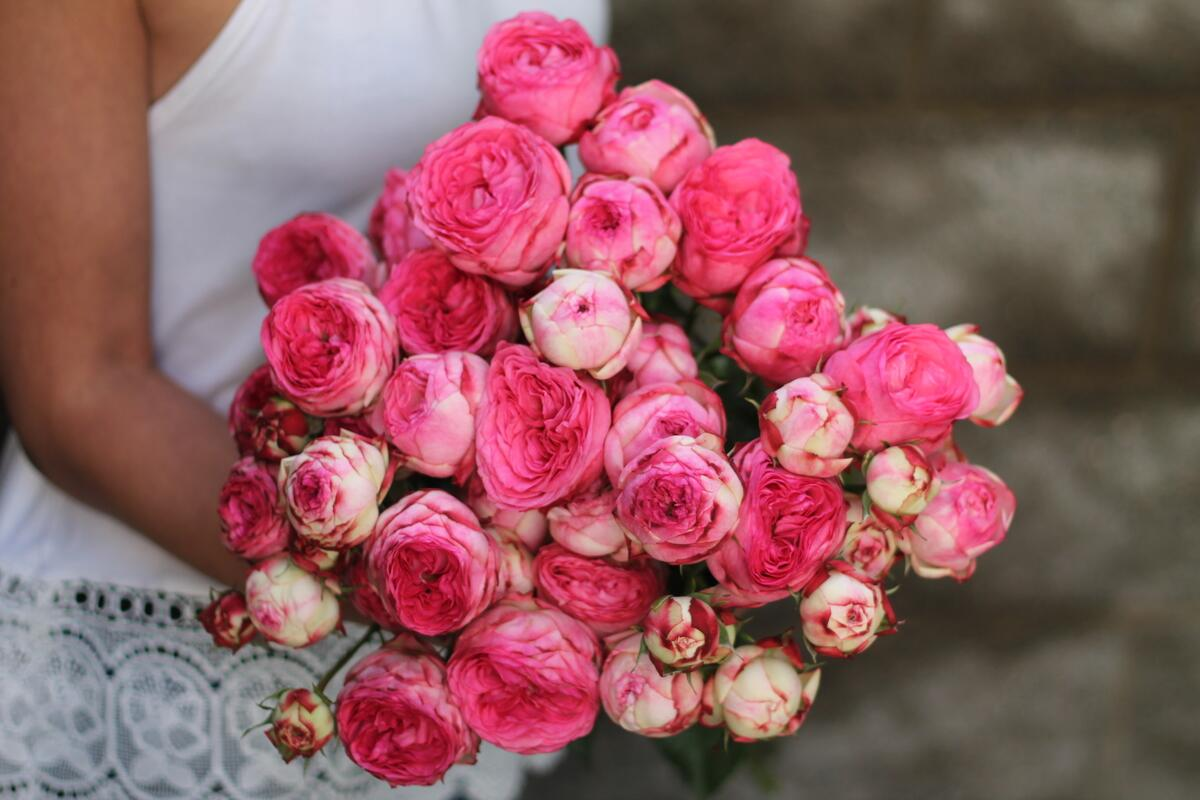 Кустовая роза Dutch Magic