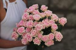 Роза Sweet Flow