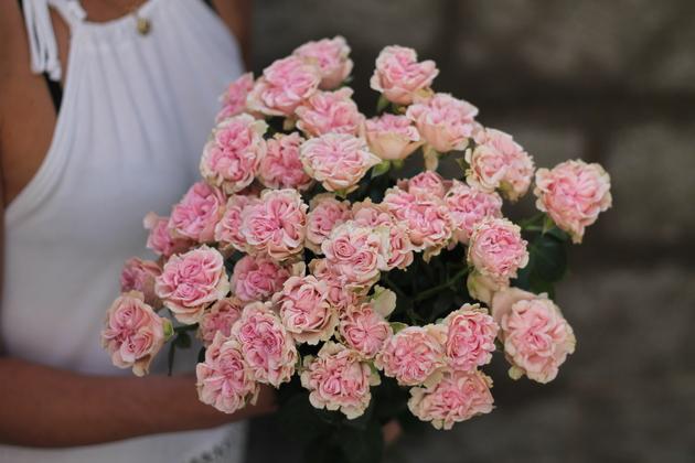 Кустовая роза Sweet Flow