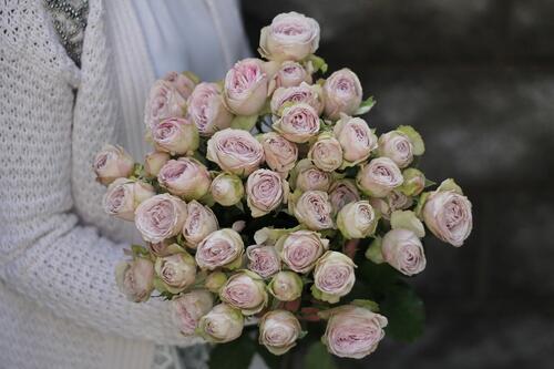 Кустовая роза Silver Lace